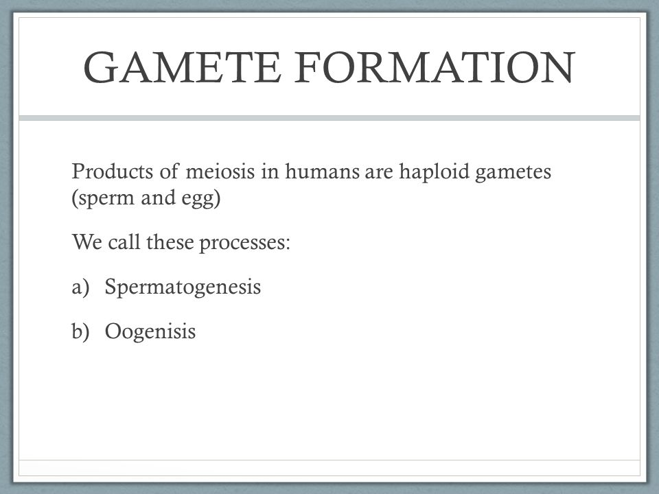 GAMETE FORMATION Products of meiosis in humans are haploid gametes (sperm and egg) We call these processes: a)Spermatogenesis b)Oogenisis