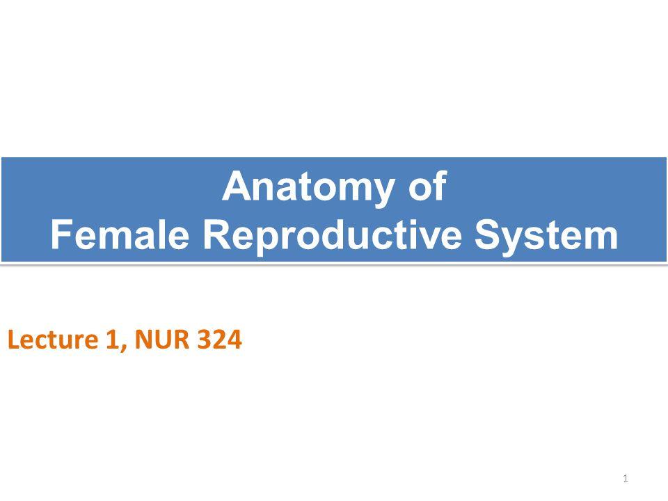 Layers of the uterus 1. Endometrium. 2. Myometrium. 3. Perimetrium 22