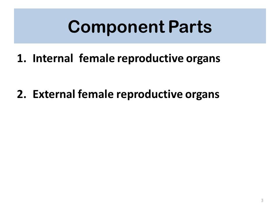 External female reproductive organs Collectively, the external female reproductive organs are called the Vulva.