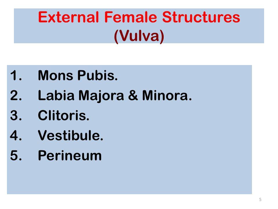 Ovaries and Relationship to Uterine Tube and Uterus Figure 28–14 36
