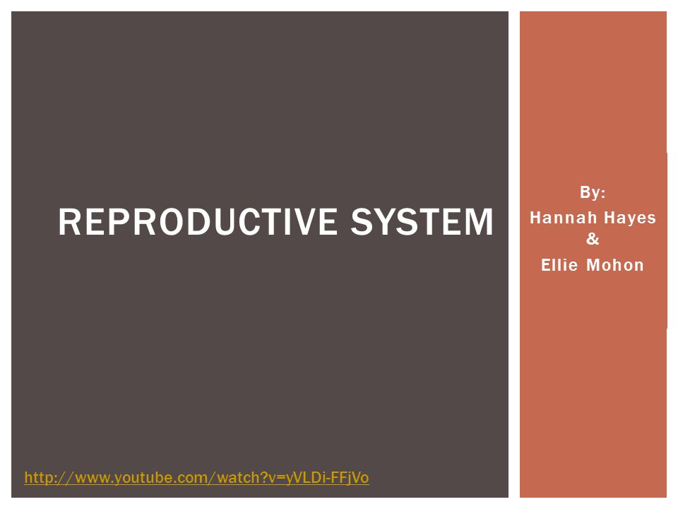 By: Hannah Hayes & Ellie Mohon REPRODUCTIVE SYSTEM http://www.youtube.com/watch v=yVLDi-FFjVo