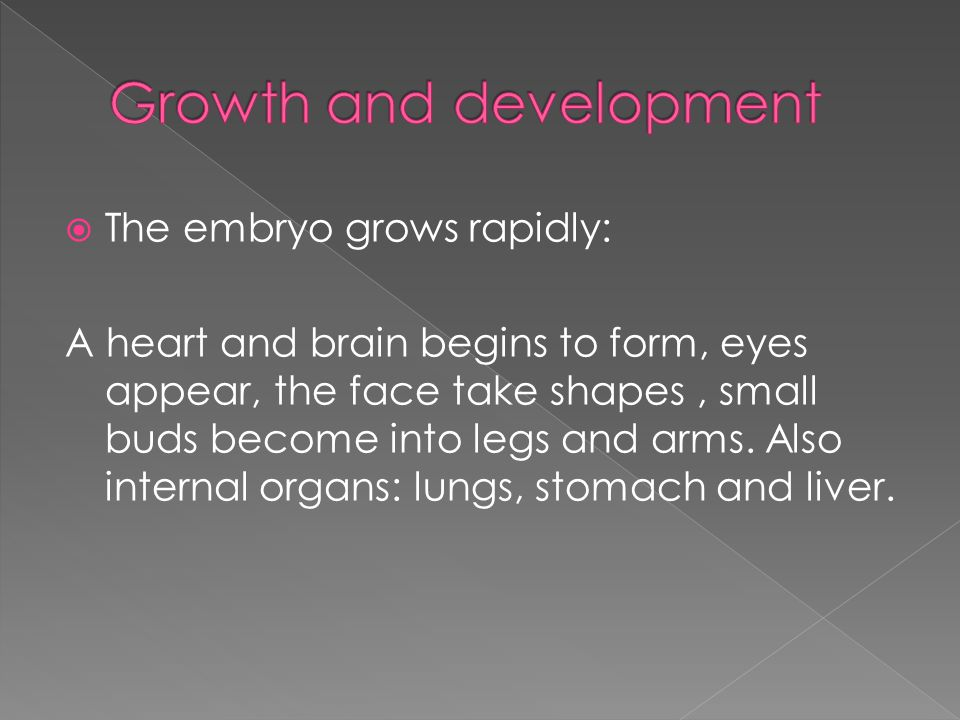  The embryo grows rapidly: A heart and brain begins to form, eyes appear, the face take shapes, small buds become into legs and arms.