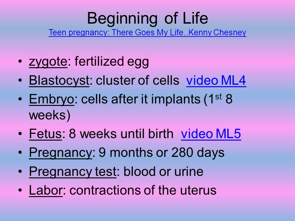 Beginning of Life Teen pregnancy: There Goes My Life..Kenny Chesney Teen pregnancy: There Goes My Life..Kenny Chesney zygote: fertilized egg Blastocys