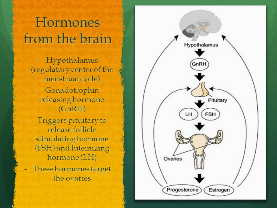 Hormones from the brain -Hypothalamus (regulatory center of the menstrual cycle) -Gonadotrophin releasing hormone (GnRH) -Triggers pituitary to releas