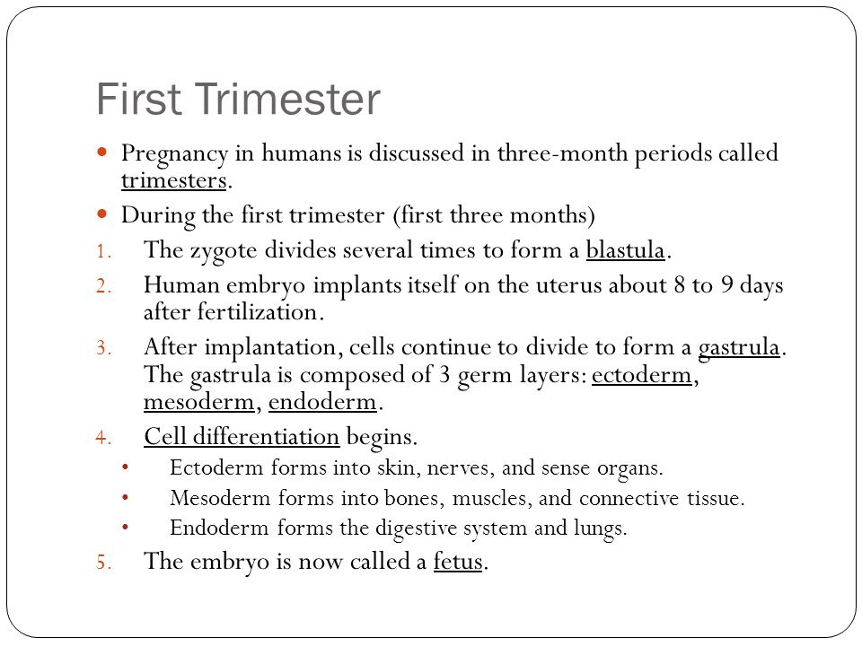 First Trimester Pregnancy in humans is discussed in three-month periods called trimesters. During the first trimester (first three months) 1. The zygo