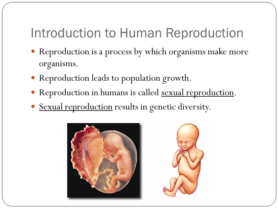 Introduction to Human Reproduction Reproduction is a process by which organisms make more organisms. Reproduction leads to population growth. Reproduc