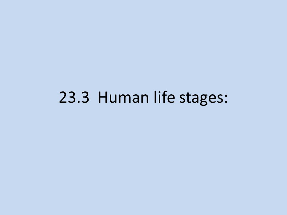 23.3 Human life stages: