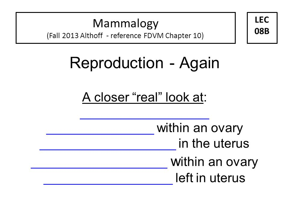 Positioning of implanted embryos that become fetuses. Implanted = __________