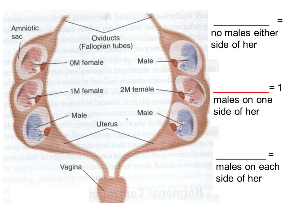 __________ = no males either side of her __________= 1 males on one side of her _________ = males on each side of her