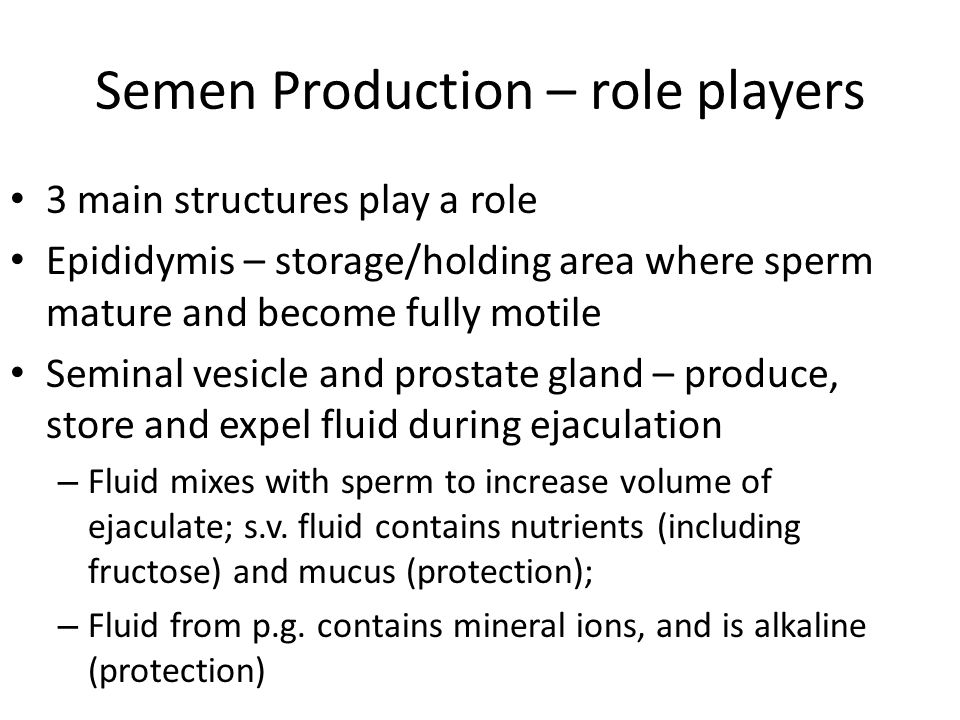 Semen Production – role players 3 main structures play a role Epididymis – storage/holding area where sperm mature and become fully motile Seminal vesicle and prostate gland – produce, store and expel fluid during ejaculation – Fluid mixes with sperm to increase volume of ejaculate; s.v.