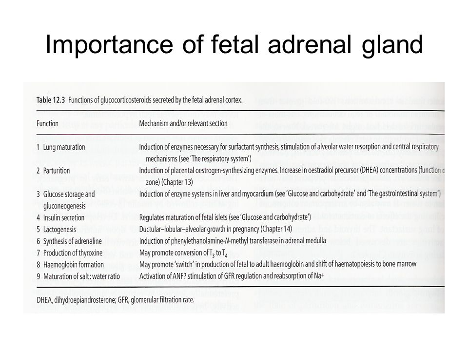 Parturition Three stages –First stage Initiation of myometrium contraction Initiated by the fetus –Second stage Expulsion of the fetus –Third stage Expulsion of fetal membrane