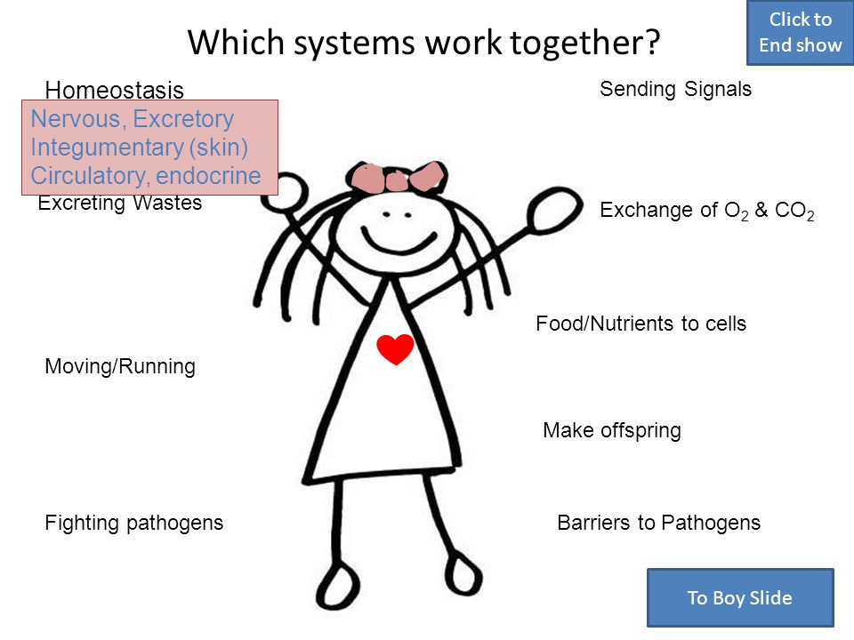 Which systems work together.