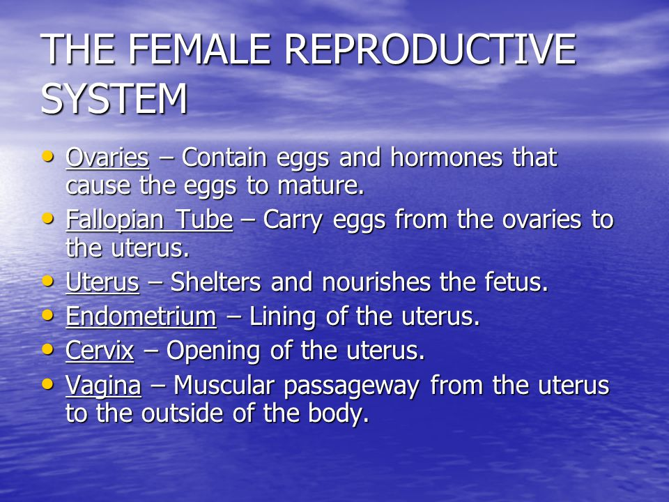 THE FEMALE REPRODUCTIVE SYSTEM Has 3 important functions. Has 3 important functions. –Produce and store egg cells –Allow fertilization to occur –Nouri