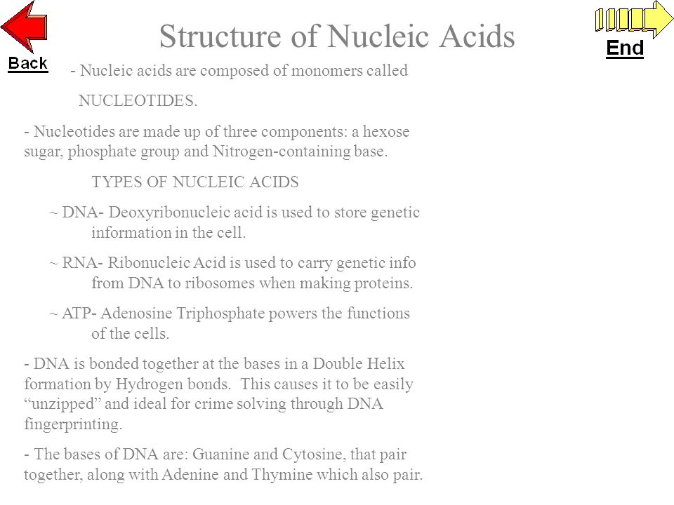 - Nucleic acids are composed of monomers called NUCLEOTIDES.