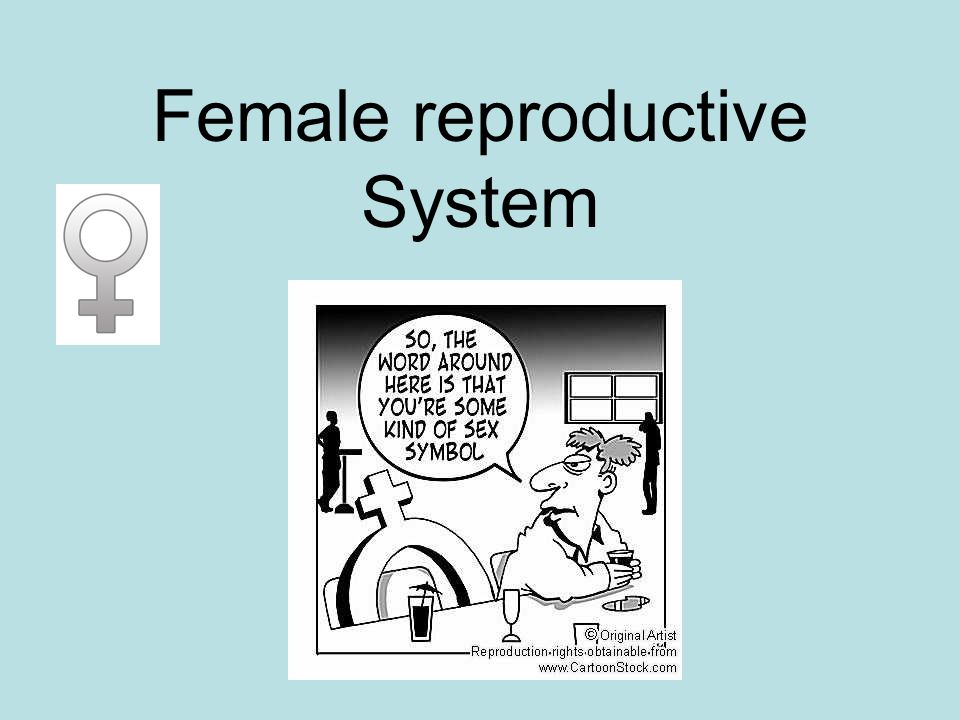Color Code pg.501 a.Ovaries b.Uterine tubes c.Uterus d.Vagina e.Fimbriae *.