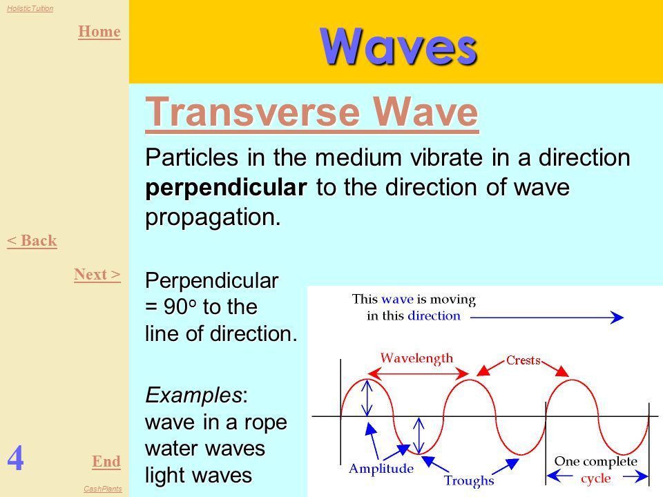 Home End HolisticTuition CashPlants Understanding Waves: Physics 3 1.A wave is a traveling disturbance from a vibrating or oscillating source.