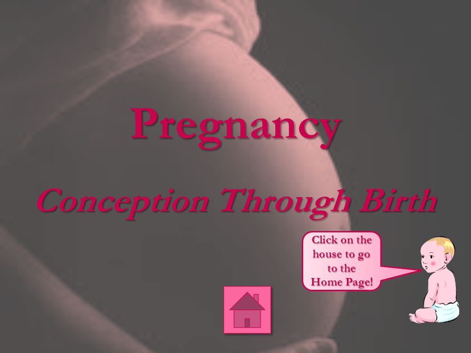 Pregnancy Conception Through Birth Click on the house to go to the Home Page!