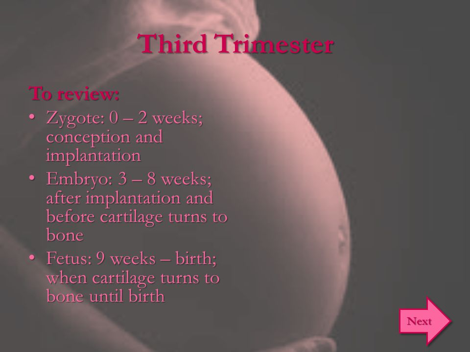 Third Trimester To review: Zygote: 0 – 2 weeks; conception and implantation Zygote: 0 – 2 weeks; conception and implantation Embryo: 3 – 8 weeks; after implantation and before cartilage turns to bone Embryo: 3 – 8 weeks; after implantation and before cartilage turns to bone Fetus: 9 weeks – birth; when cartilage turns to bone until birth Fetus: 9 weeks – birth; when cartilage turns to bone until birth Next
