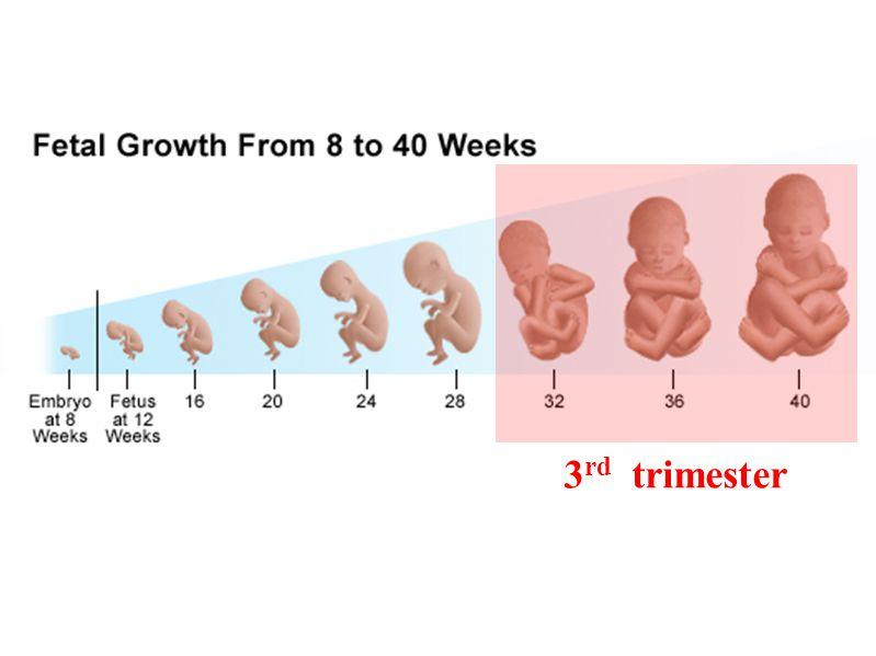 3 rd trimester
