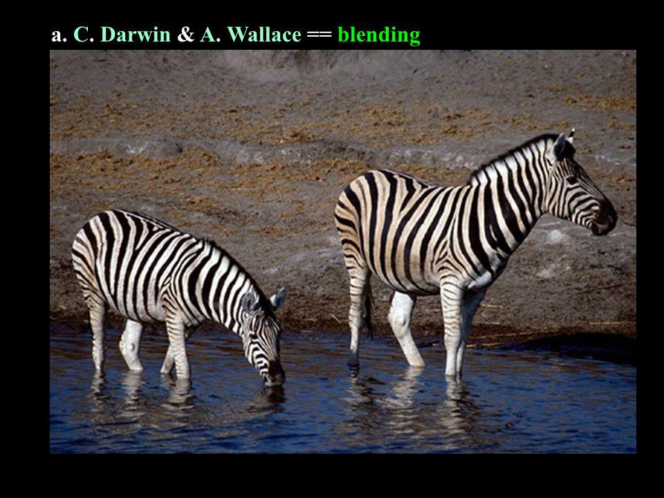 a. C. C. Darwin & A. A. Wallace == blending
