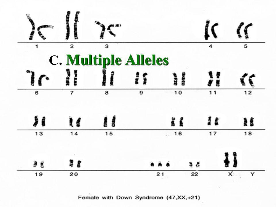C. Multiple Alleles