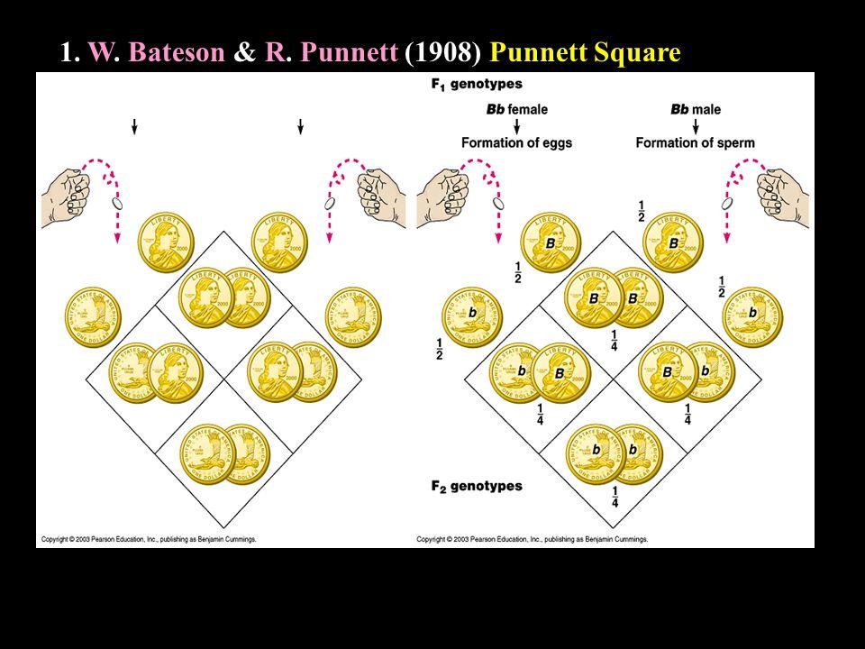 1. W. W. Bateson & R. R. Punnett (1908) Punnett Square