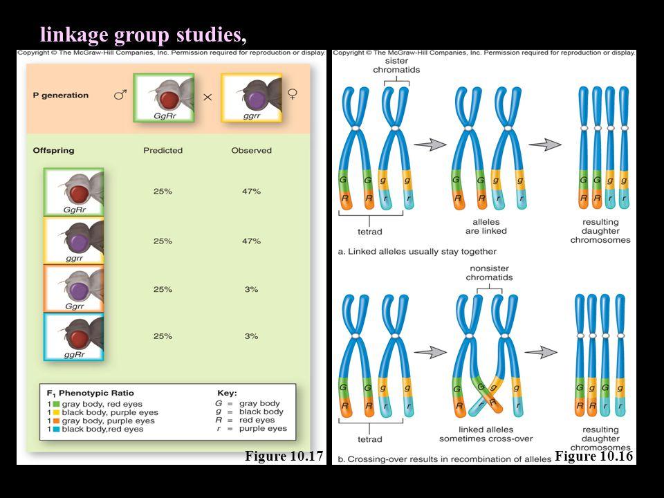 Figure 10.17 linkage group studies, Figure 10.16