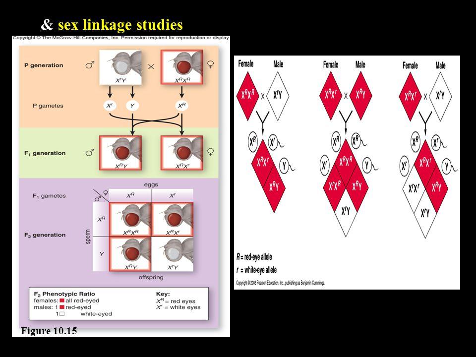 & sex linkage studies Figure 10.15