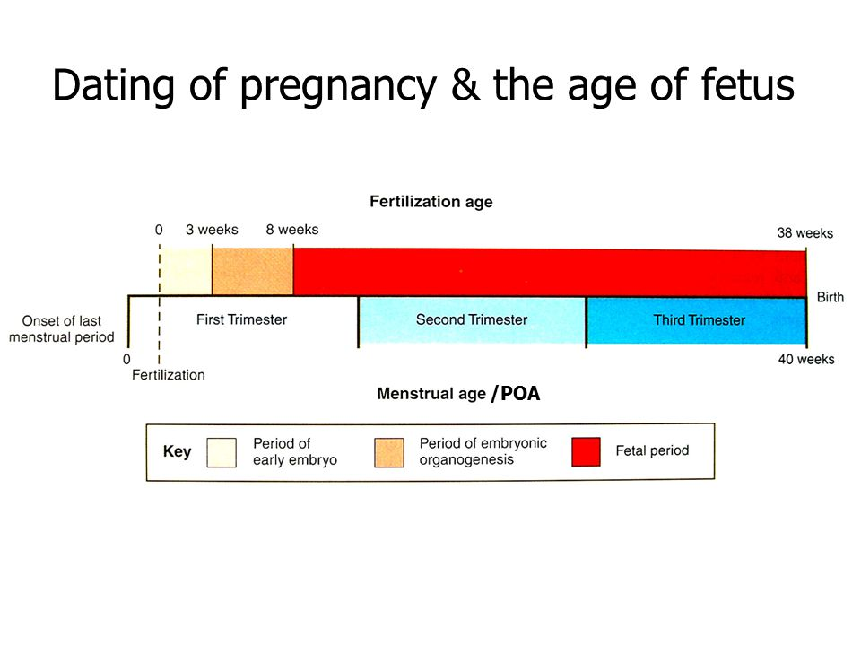 Dating of pregnancy & the age of fetus /POA