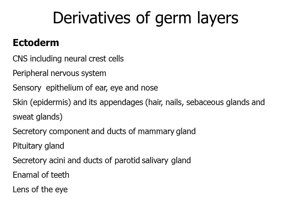 Derivatives of germ layers Ectoderm CNS including neural crest cells Peripheral nervous system Sensory epithelium of ear, eye and nose Skin (epidermis