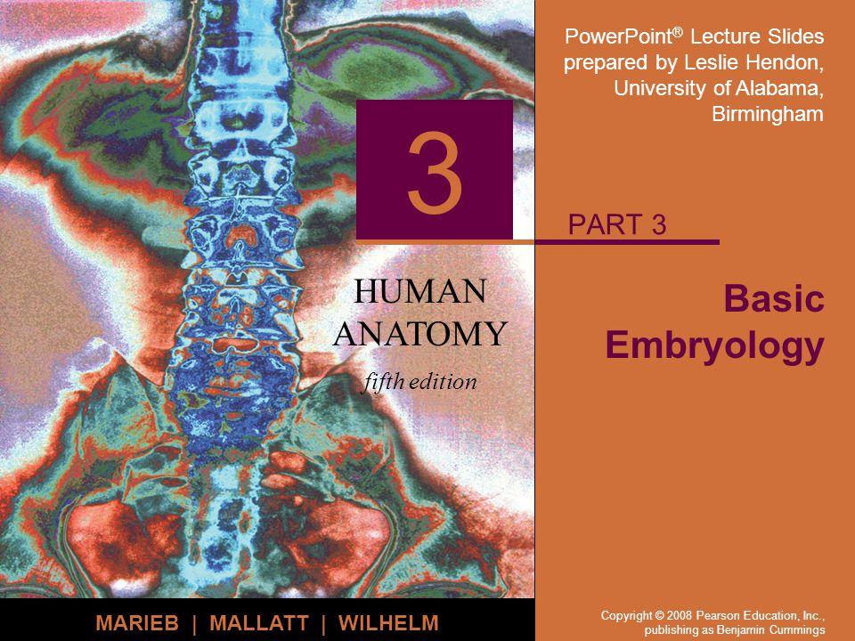 PowerPoint ® Lecture Slides prepared by Leslie Hendon, University of Alabama, Birmingham HUMAN ANATOMY fifth edition MARIEB | MALLATT | WILHELM 3 Copy