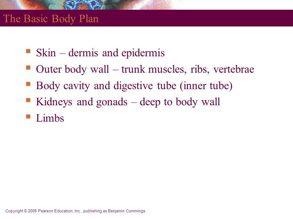 Copyright © 2008 Pearson Education, Inc., publishing as Benjamin Cummings The Basic Body Plan  Skin – dermis and epidermis  Outer body wall – trunk