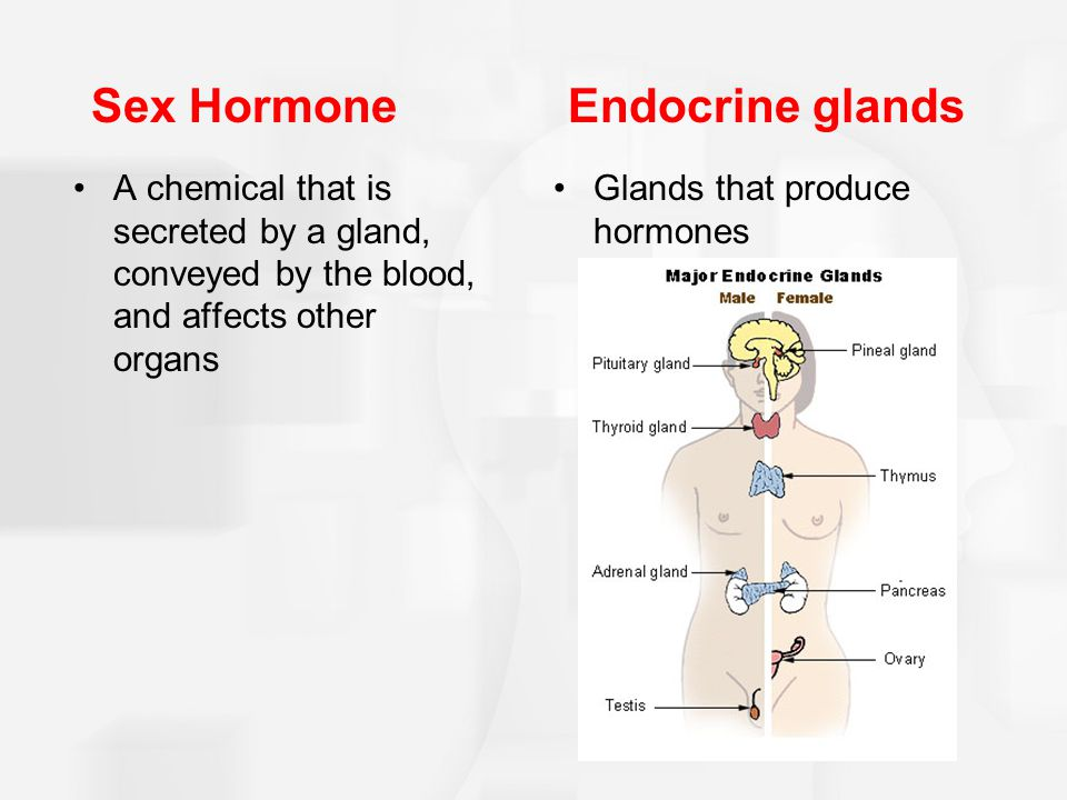 Sex Hormone Endocrine glands A chemical that is secreted by a gland, conveyed by the blood, and affects other organs Glands that produce hormones