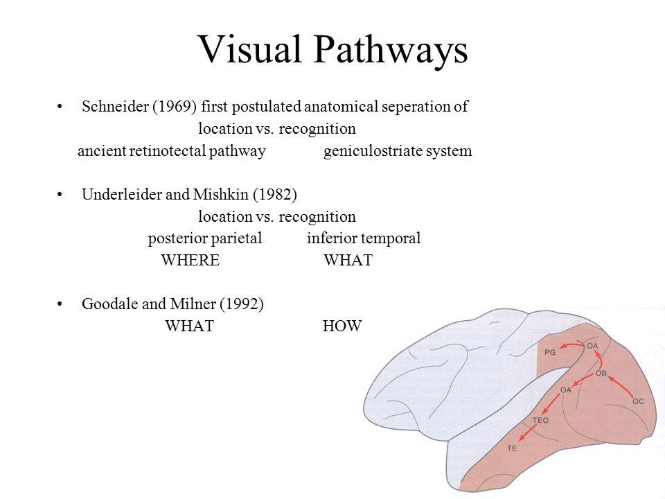 Lateral Occipital Complex Grill Spector et al.