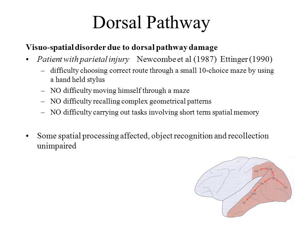 Extrastriate Body Area Downing et al.