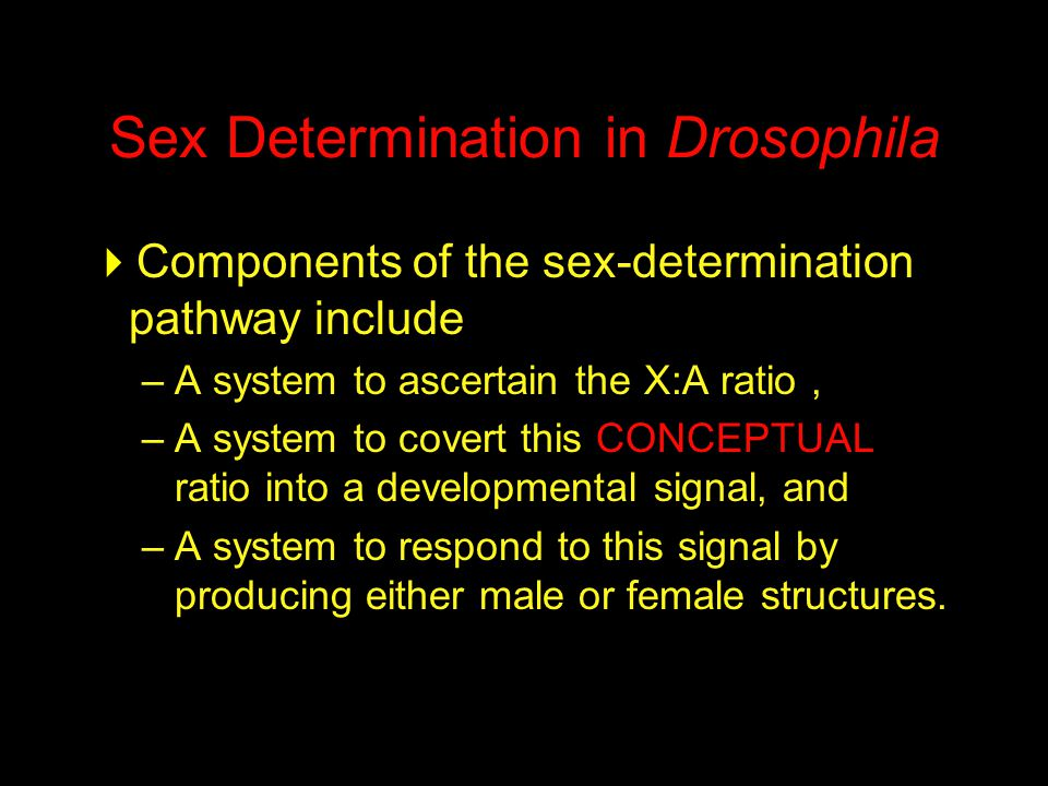 Sex Determination in Drosophila  Components of the sex-determination pathway include –A system to ascertain the X:A ratio, –A system to covert this CONCEPTUAL ratio into a developmental signal, and –A system to respond to this signal by producing either male or female structures.