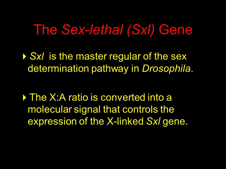 The Sex-lethal (Sxl) Gene  Sxl is the master regular of the sex determination pathway in Drosophila.  The X:A ratio is converted into a molecular si