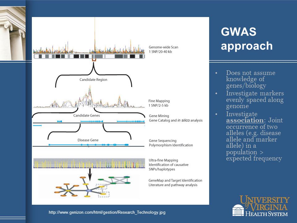 http://www.genizon.com/html/gestion/Research_Technology.jpg GWAS approach Does not assume knowledge of genes/biology Investigate markers evenly spaced