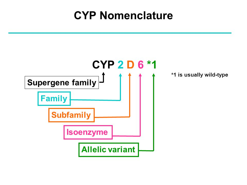 CYP 2 D 6 *1 Supergene family Family Subfamily Isoenzyme Allelic variant CYP Nomenclature *1 is usually wild-type