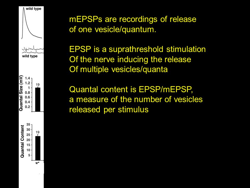 mEPSPs are recordings of release of one vesicle/quantum. EPSP is a suprathreshold stimulation Of the nerve inducing the release Of multiple vesicles/q