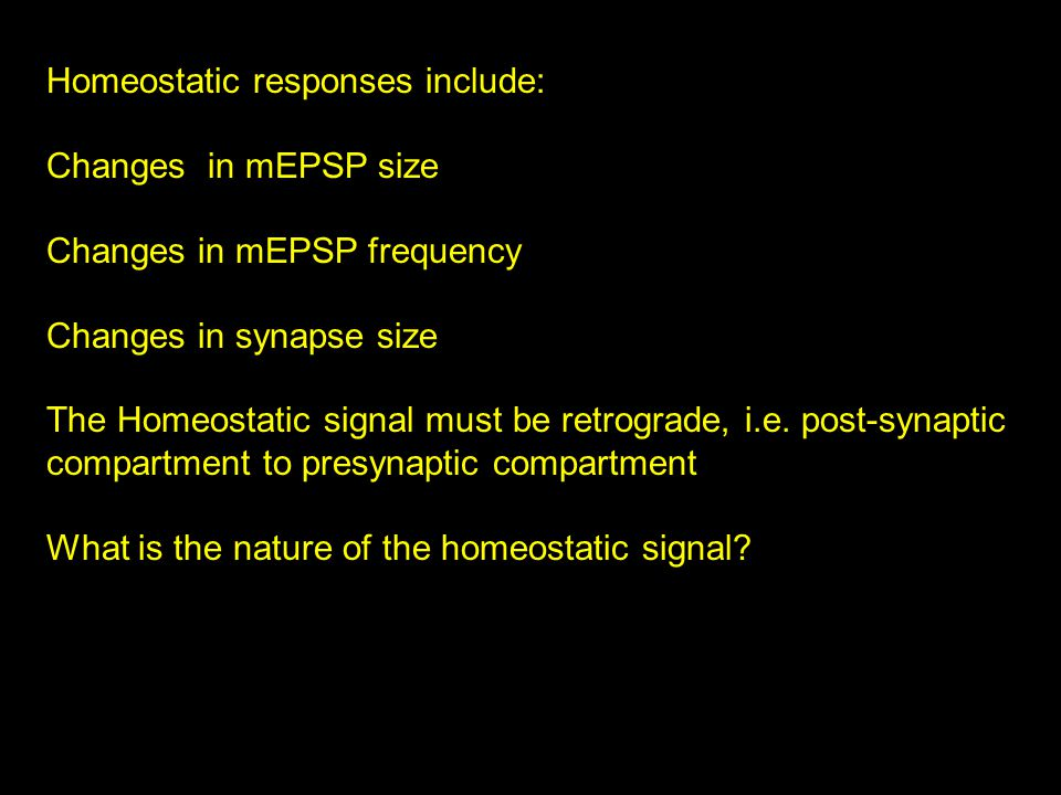 Homeostatic responses include: Changes in mEPSP size Changes in mEPSP frequency Changes in synapse size The Homeostatic signal must be retrograde, i.e