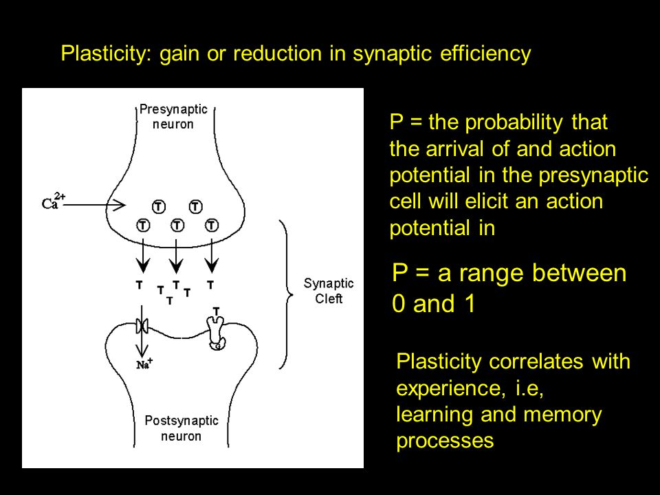 Plasticity: gain or reduction in synaptic efficiency P = a range between 0 and 1 P = the probability that the arrival of and action potential in the presynaptic cell will elicit an action potential in Plasticity correlates with experience, i.e, learning and memory processes