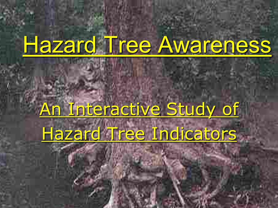 Hazard Tree Awareness An Interactive Study of Hazard Tree Indicators