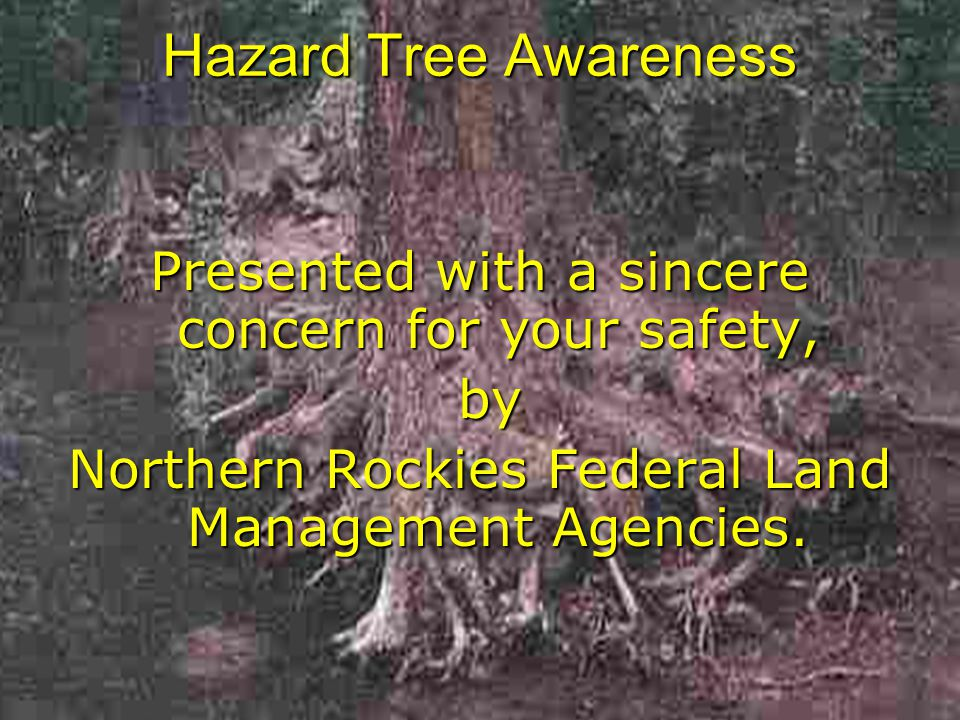 Hazard Tree Awareness Presented with a sincere concern for your safety, by by Northern Rockies Federal Land Management Agencies.