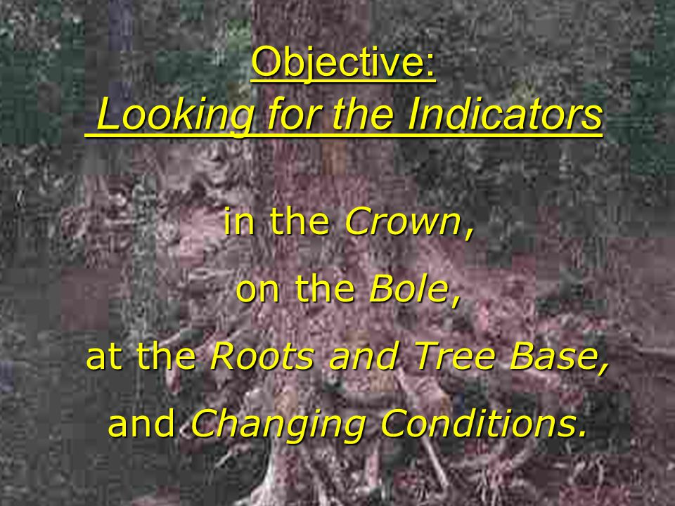 Objective: Looking for the Indicators in the Crown, on the Bole, at the Roots and Tree Base, and Changing Conditions.