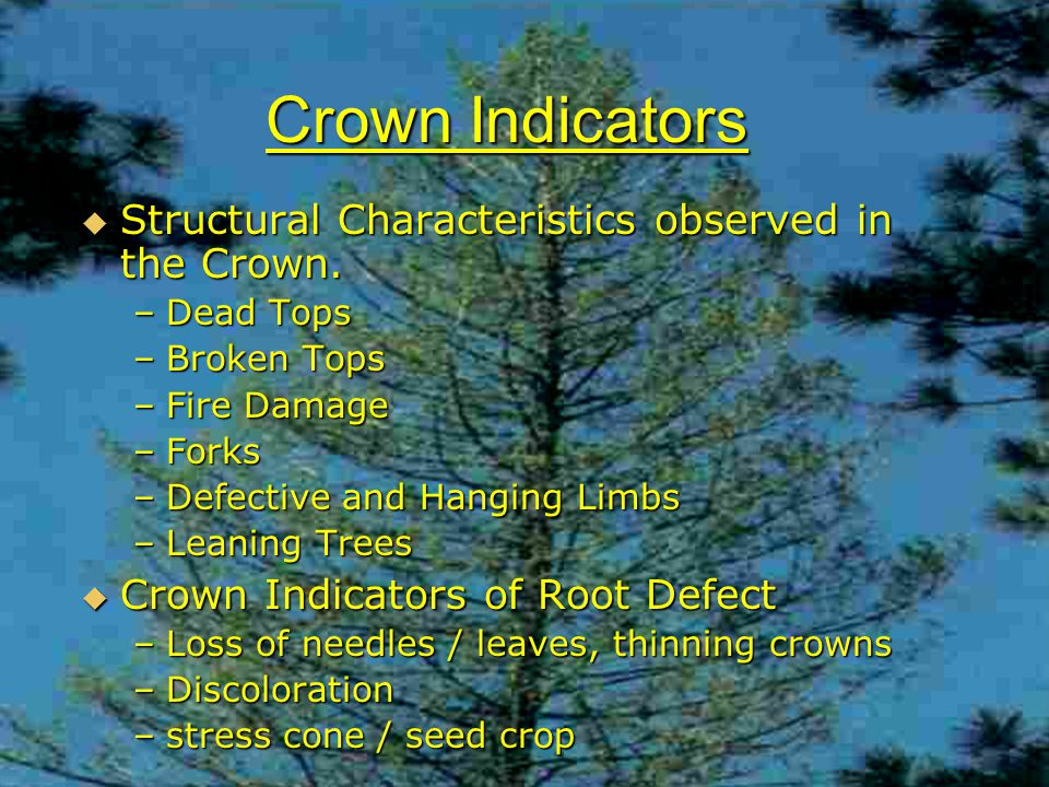 Crown Indicators  Structural Characteristics observed in the Crown.