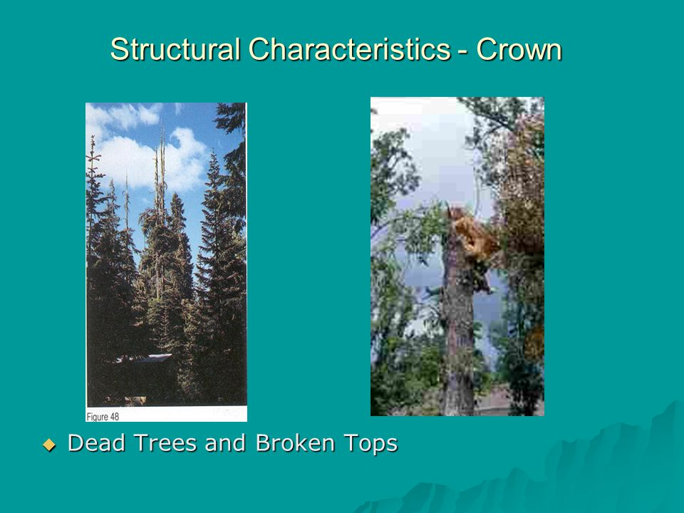 Structural Characteristics - Crown  Dead Trees and Broken Tops