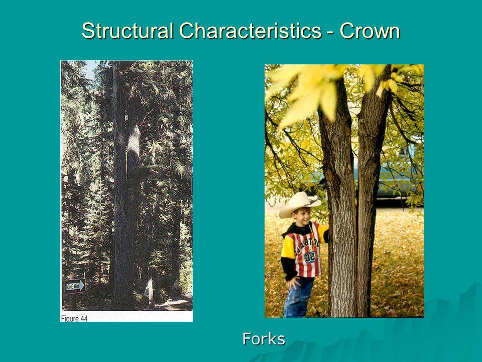 Structural Characteristics - Crown Forks Forks