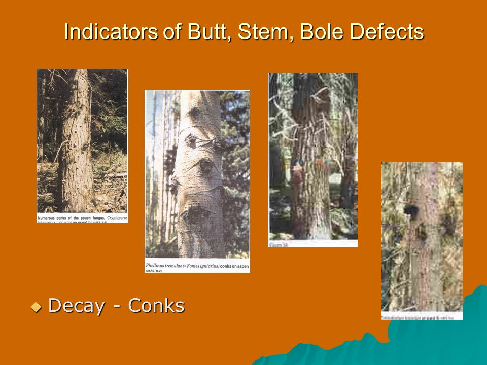 Indicators of Butt, Stem, Bole Defects  Decay - Conks