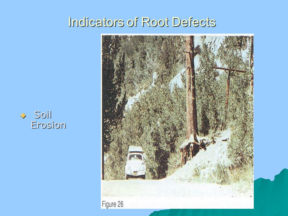 Indicators of Root Defects  Soil Erosion